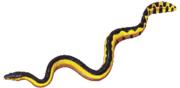 Ular laut berbadan kuning, Pelamis platurus.