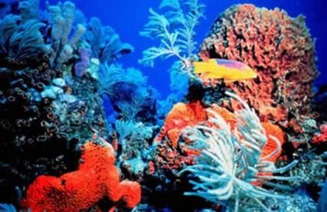 Terumbu karang perairan Alor, Nusa Tenggara Timur