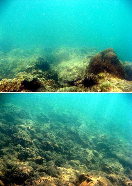 Kerusakan karang di daerah rataan terumbu karang di Pantai Penyusuk, Bangka (Des 2008)