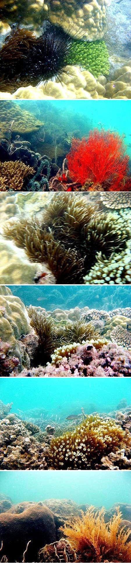 Terumbu karang Pantai Penyusuk yang baik, Bangka (2008)
