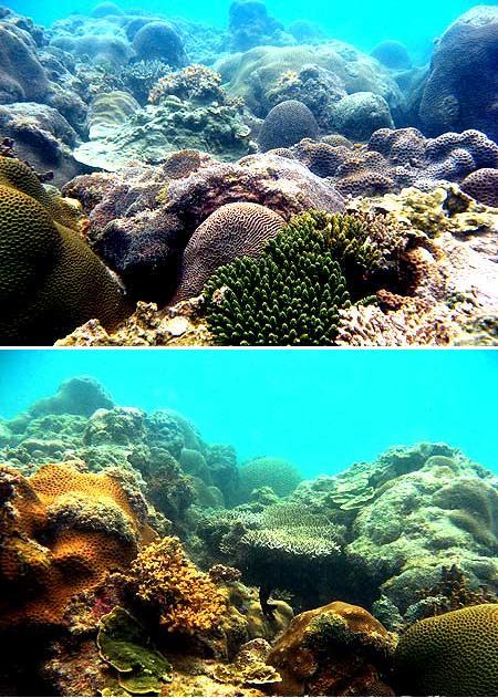 Terumbu karang yang baik Pantai Teluk Limau Sungailiat, Bangka