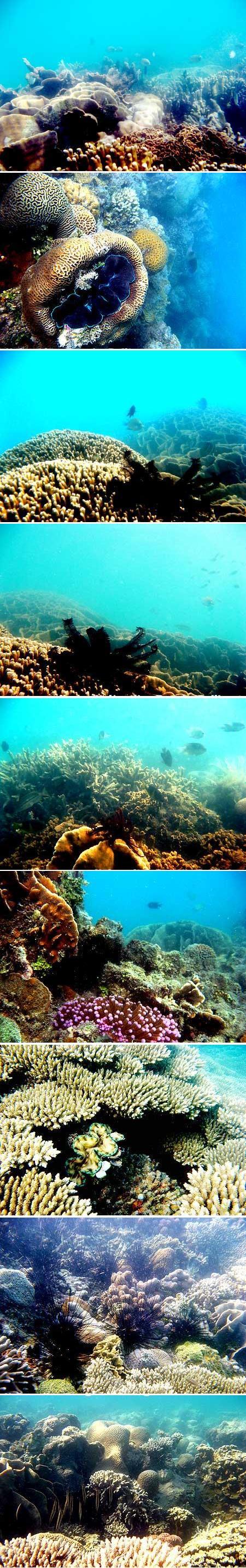 Terumbu Karang di sekitar Pulau Semujur Bangka Belitung