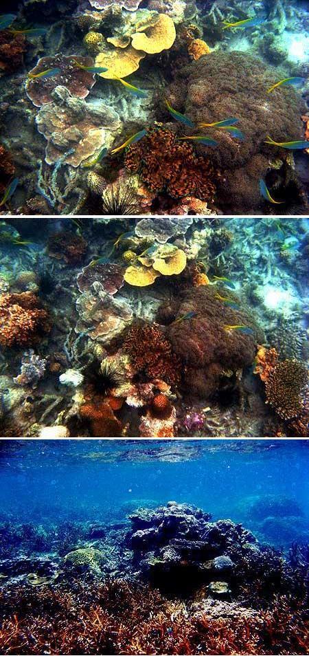 Terumbu karang sebelah barat Karang Kering Sungailiat Bangka, tampak ikan ekor kuning, Tridacna (Kerang raksasa) dan Diadema (Bulu babi)