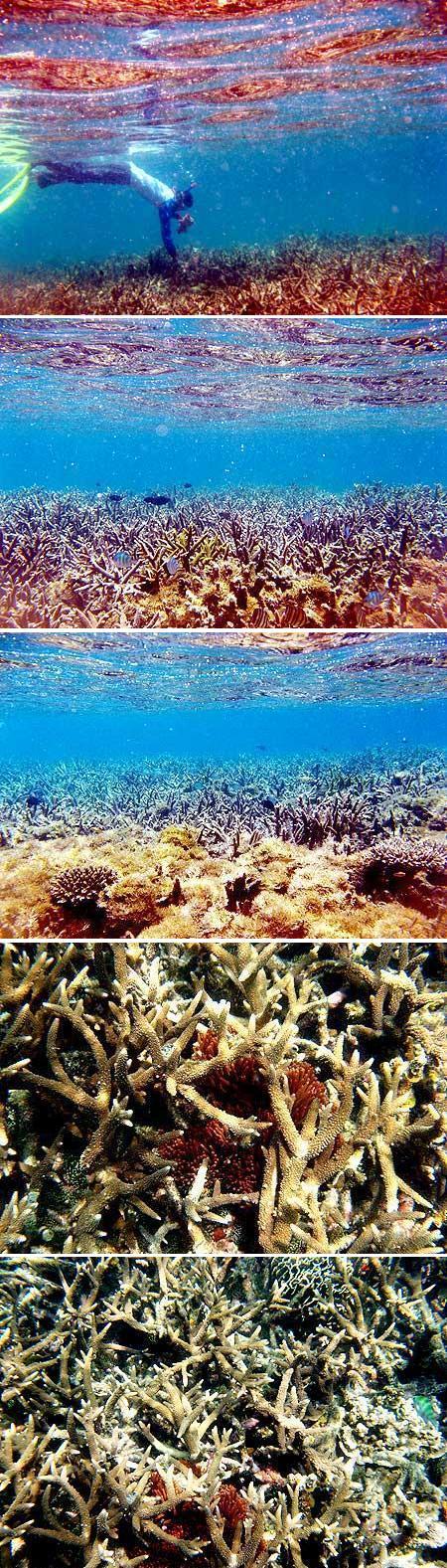Terumbu karang sebelah timur Karang Kering, Sungailiat, Bangka, didominasi oleh jenis karang branching