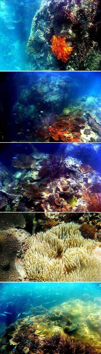 Terumbu karang Batu Putih Sungailiat Kabupaten Bangka