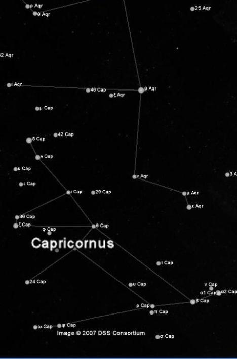 Capriconus